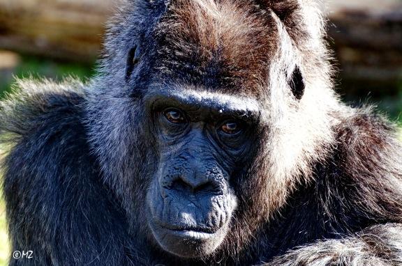 Ein sonniger Tag auch für Affen